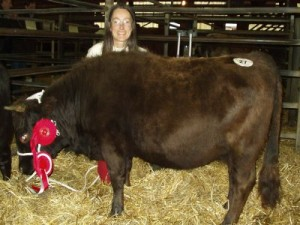 Zanfara Rebekanda: Dexter Breed Champion and Reserve Interbreed Cattle Champion
